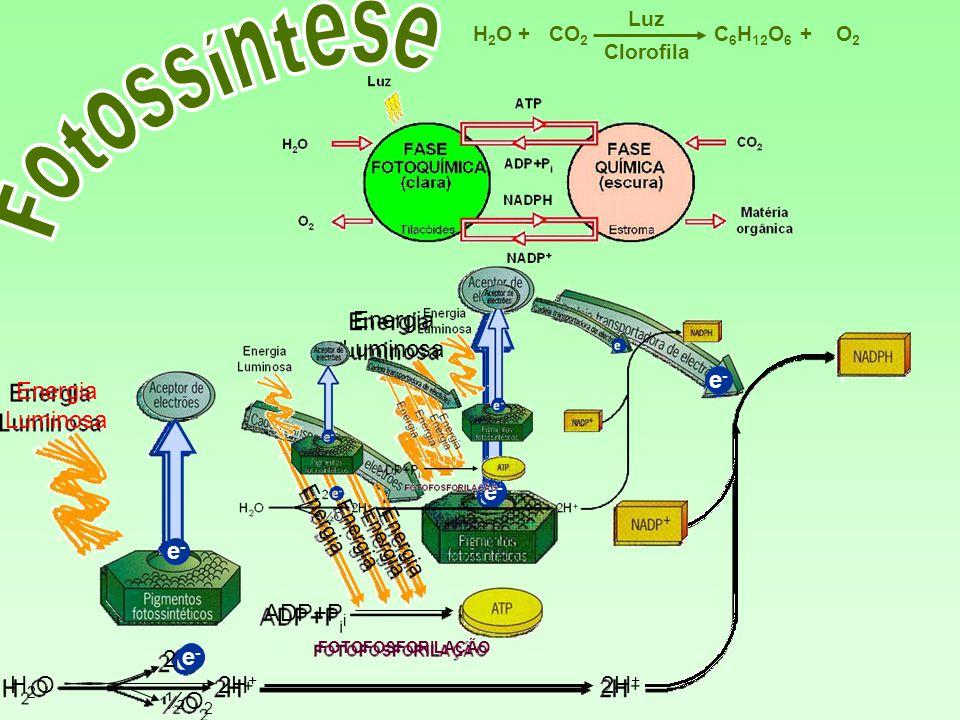 Fotossíntese Energia Luminosa Energia Luminosa e- e- e- ADP+Pi 2 e-