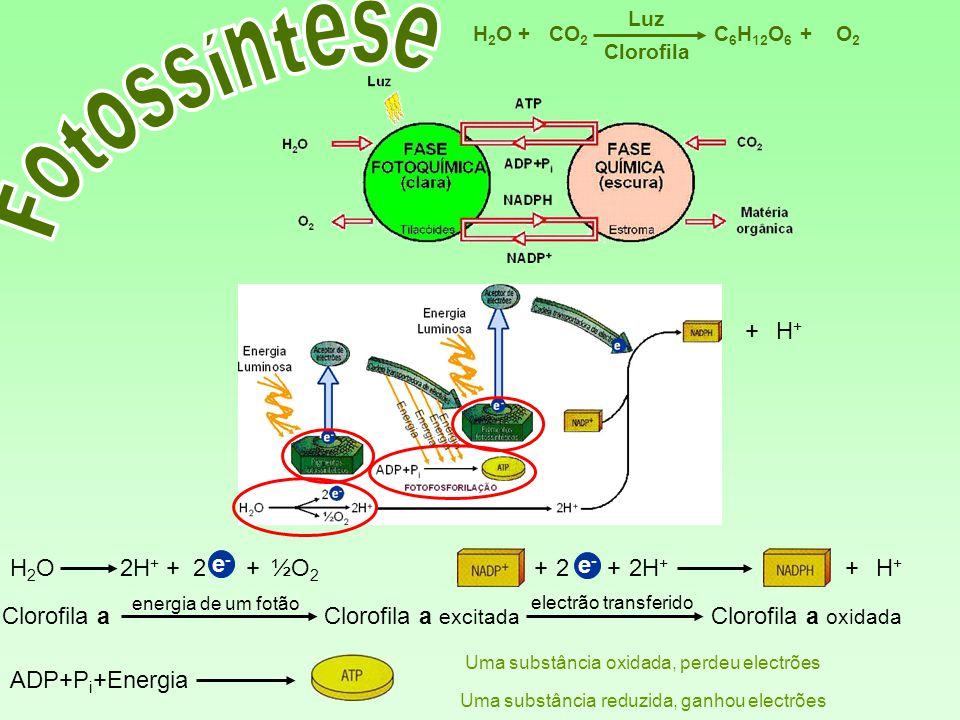 Fotossíntese + H+ H2O 2H+ + 2 e- + ½O2 + 2 e- + 2H+ + H+ Clorofila a