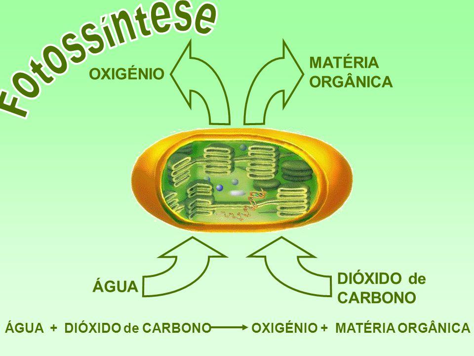 Fotossíntese MATÉRIA ORGÂNICA OXIGÉNIO DIÓXIDO de CARBONO ÁGUA ÁGUA +