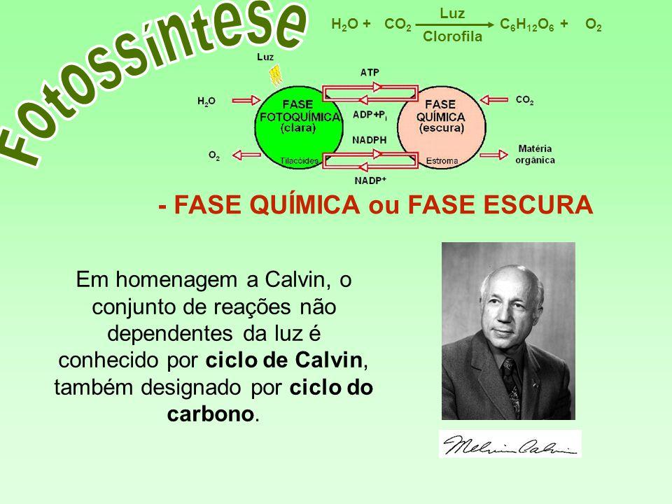 Fotossíntese - FASE QUÍMICA ou FASE ESCURA