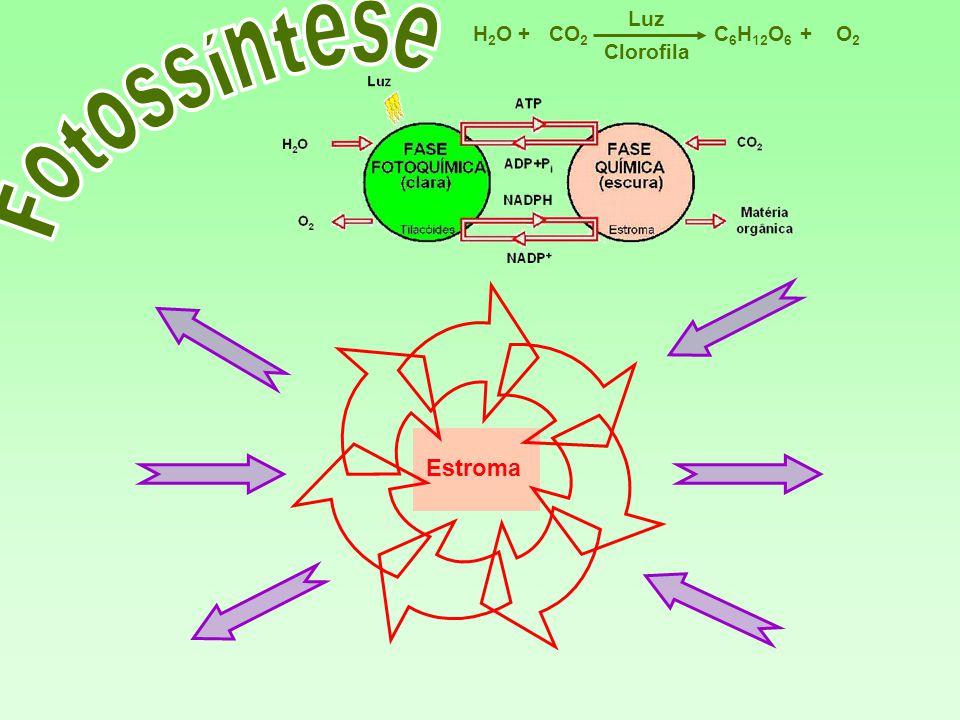 Luz H2O + CO2 C6H12O6 + O2 Clorofila Fotossíntese Estroma