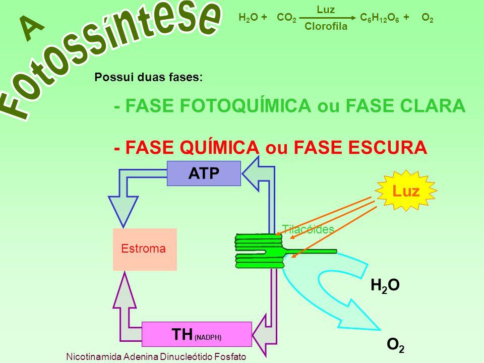 Nicotinamida Adenina Dinucleótido Fosfato