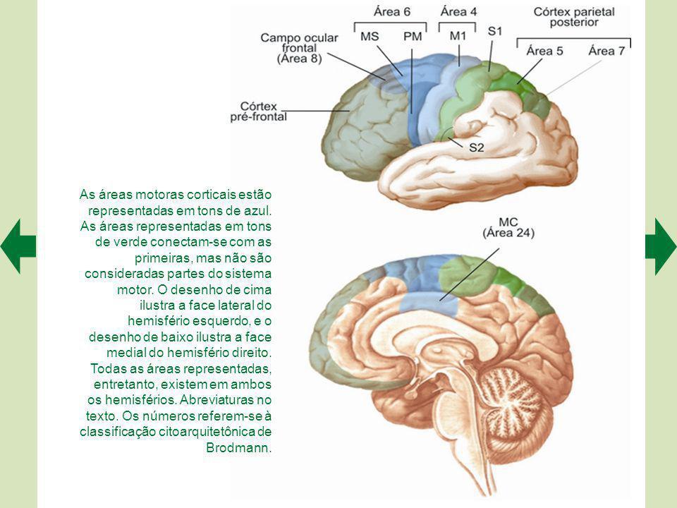 As áreas motoras corticais estão representadas em tons de azul