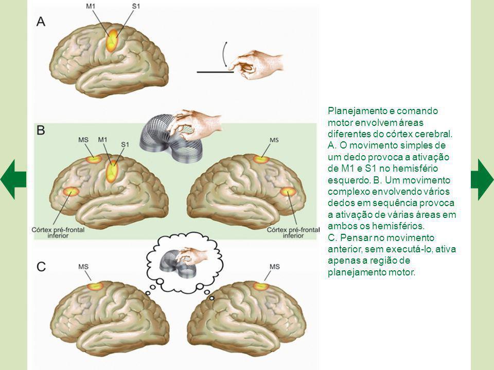 Planejamento e comando motor envolvem áreas diferentes do córtex cerebral. A. O movimento simples de