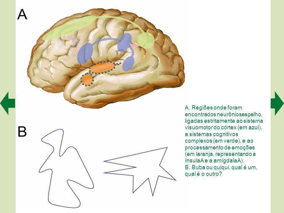A. Regiões onde foram encontrados neurôniosespelho, ligadas estritamente ao sistema visuomotor do córtex (em azul), a sistemas cognitivos complexos (em verde), e ao processamento de emoções (em laranja, representando a ínsulaA e a amígdalaA).