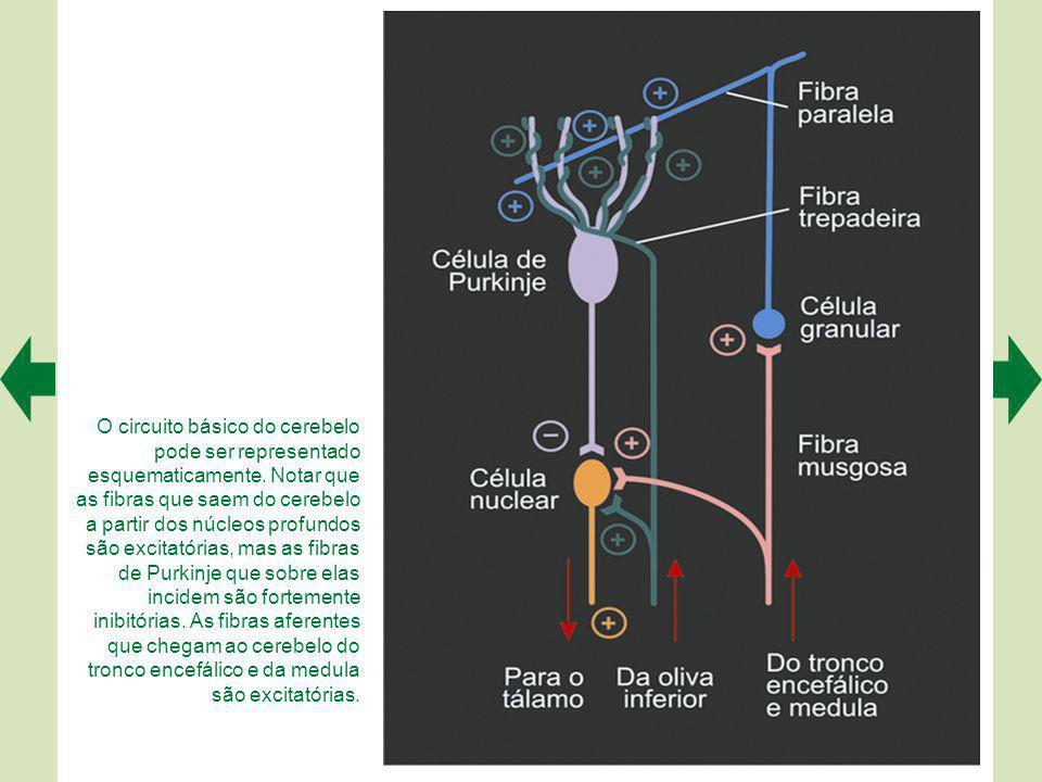 O circuito básico do cerebelo pode ser representado esquematicamente