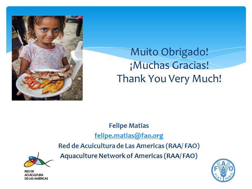 Muito Obrigado! ¡Muchas Gracias! Thank You Very Much!