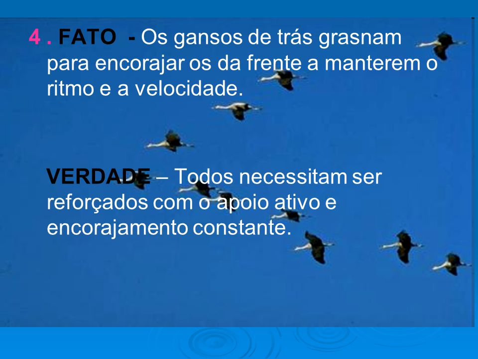 4 . FATO - Os gansos de trás grasnam para encorajar os da frente a manterem o ritmo e a velocidade.