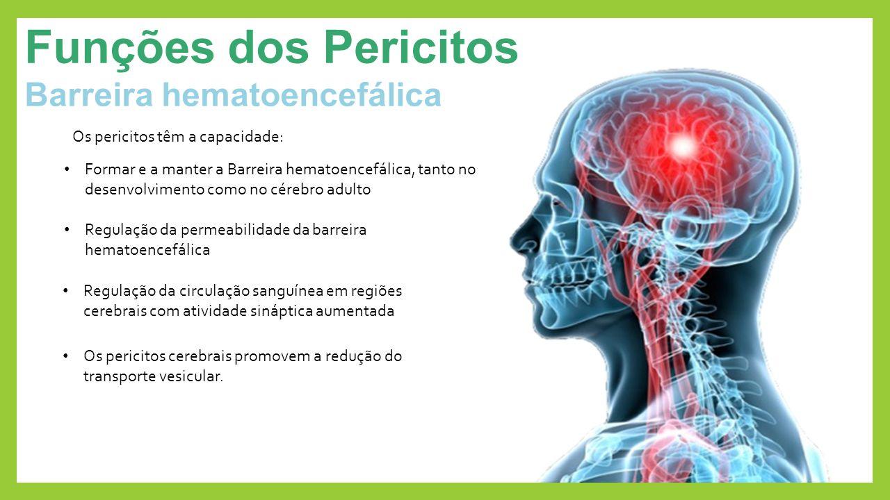Funções dos Pericitos Barreira hematoencefálica