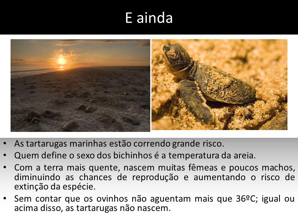 E ainda As tartarugas marinhas estão correndo grande risco.