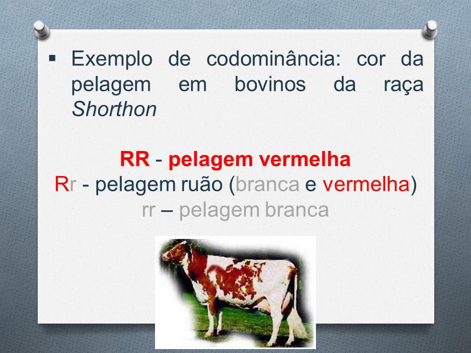 Rr - pelagem ruão (branca e vermelha)