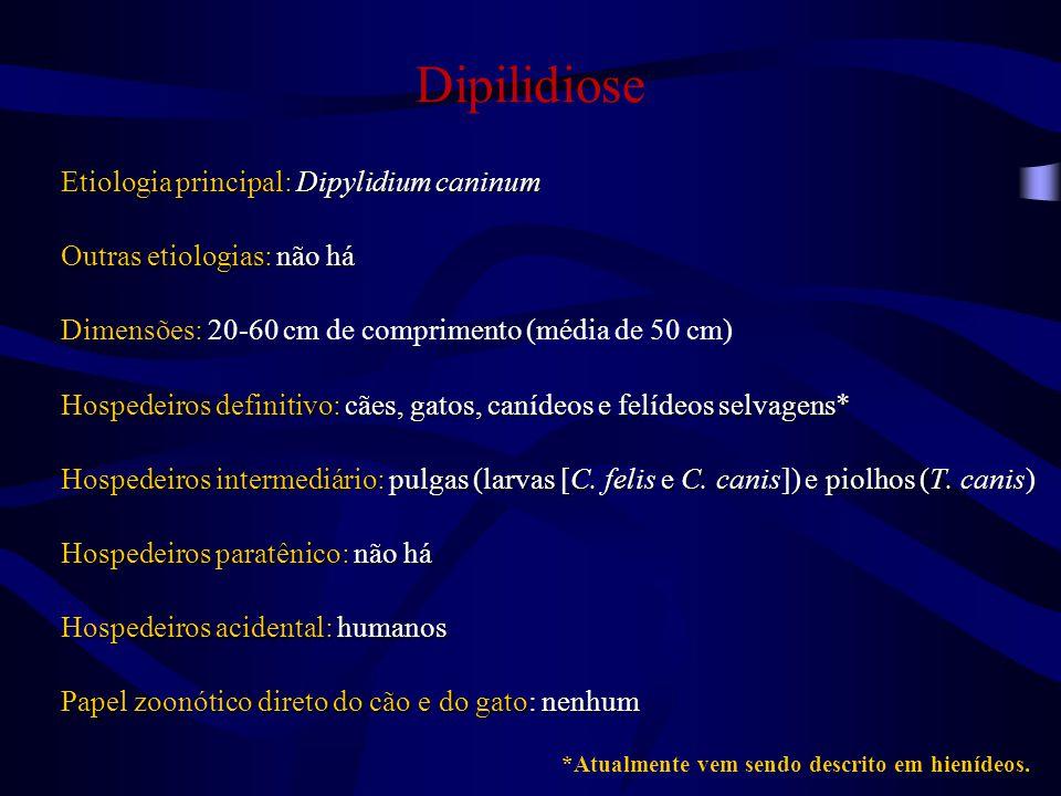 Dipilidiose Etiologia principal: Dipylidium caninum