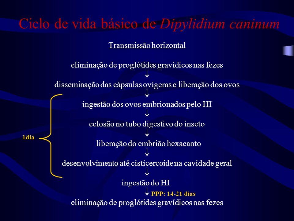 Ciclo de vida básico de Dipylidium caninum