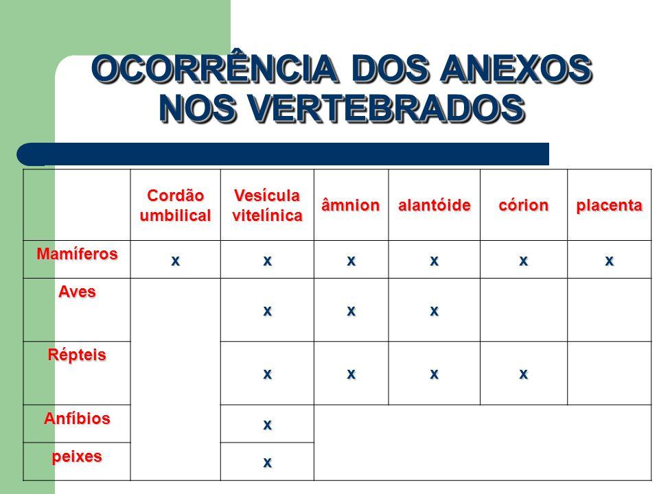 OCORRÊNCIA DOS ANEXOS NOS VERTEBRADOS