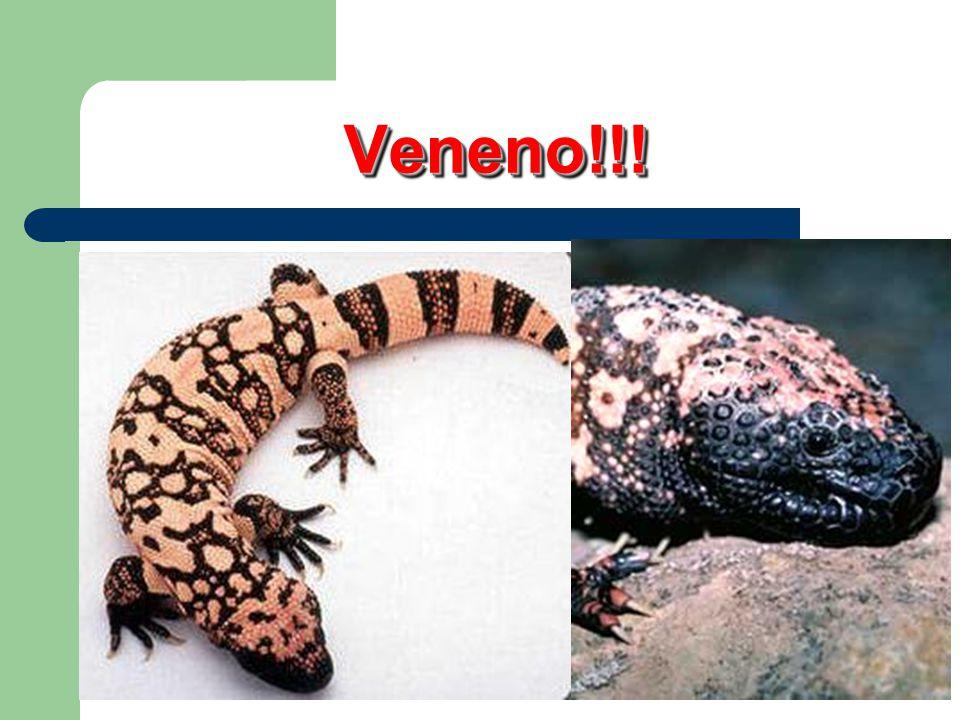 Veneno!!!