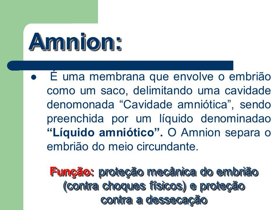 Amnion: