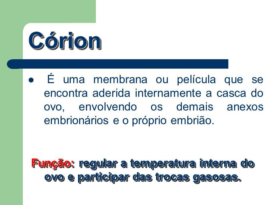 Córion É uma membrana ou película que se encontra aderida internamente a casca do ovo, envolvendo os demais anexos embrionários e o próprio embrião.