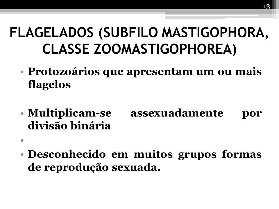 FLAGELADOS (SUBFILO MASTIGOPHORA, CLASSE ZOOMASTIGOPHOREA)