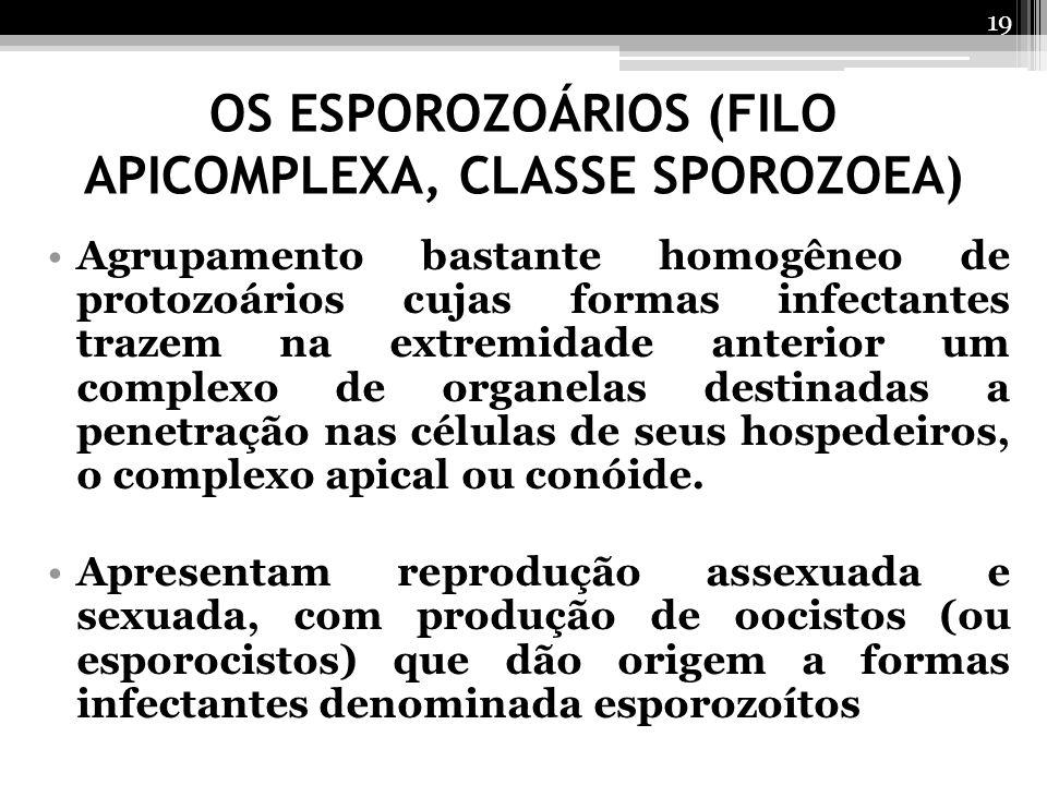 OS ESPOROZOÁRIOS (FILO APICOMPLEXA, CLASSE SPOROZOEA)