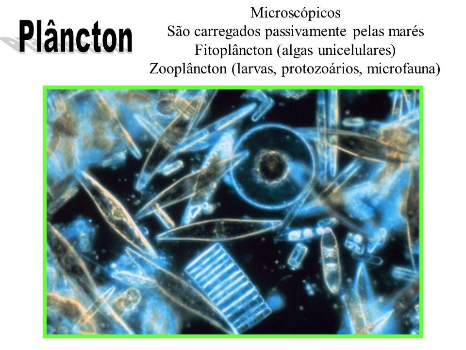 Plâncton Microscópicos São carregados passivamente pelas marés