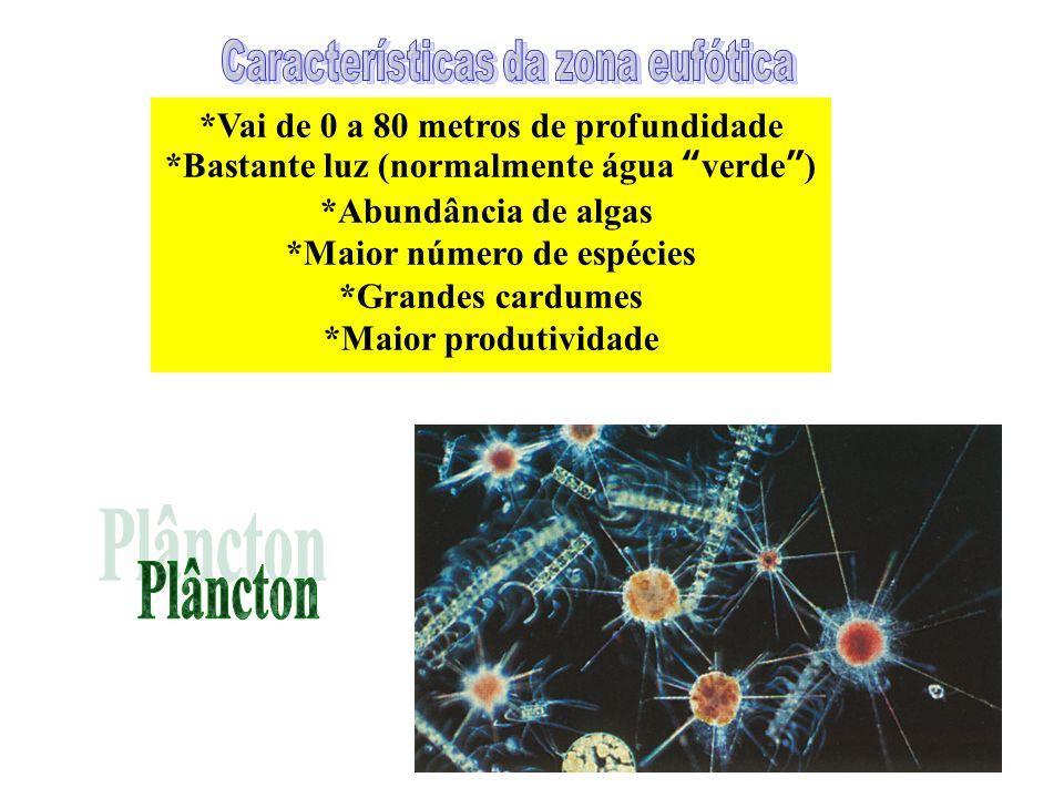 Plâncton *Vai de 0 a 80 metros de profundidade