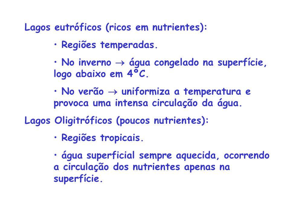 Lagos eutróficos (ricos em nutrientes):