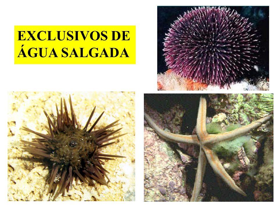 EXCLUSIVOS DE ÁGUA SALGADA