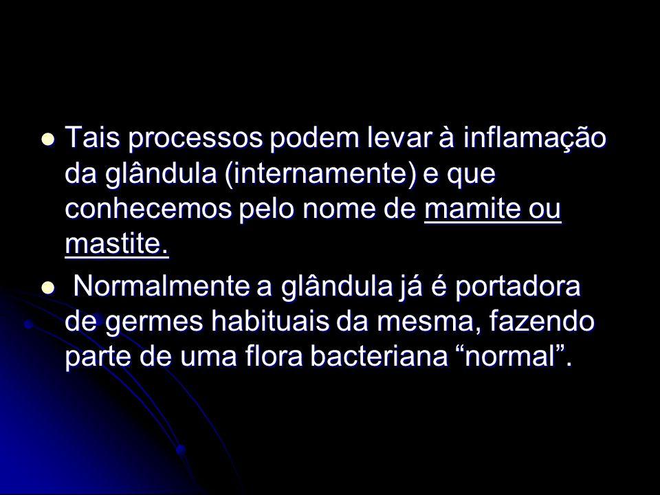 Tais processos podem levar à inflamação da glândula (internamente) e que conhecemos pelo nome de mamite ou mastite.