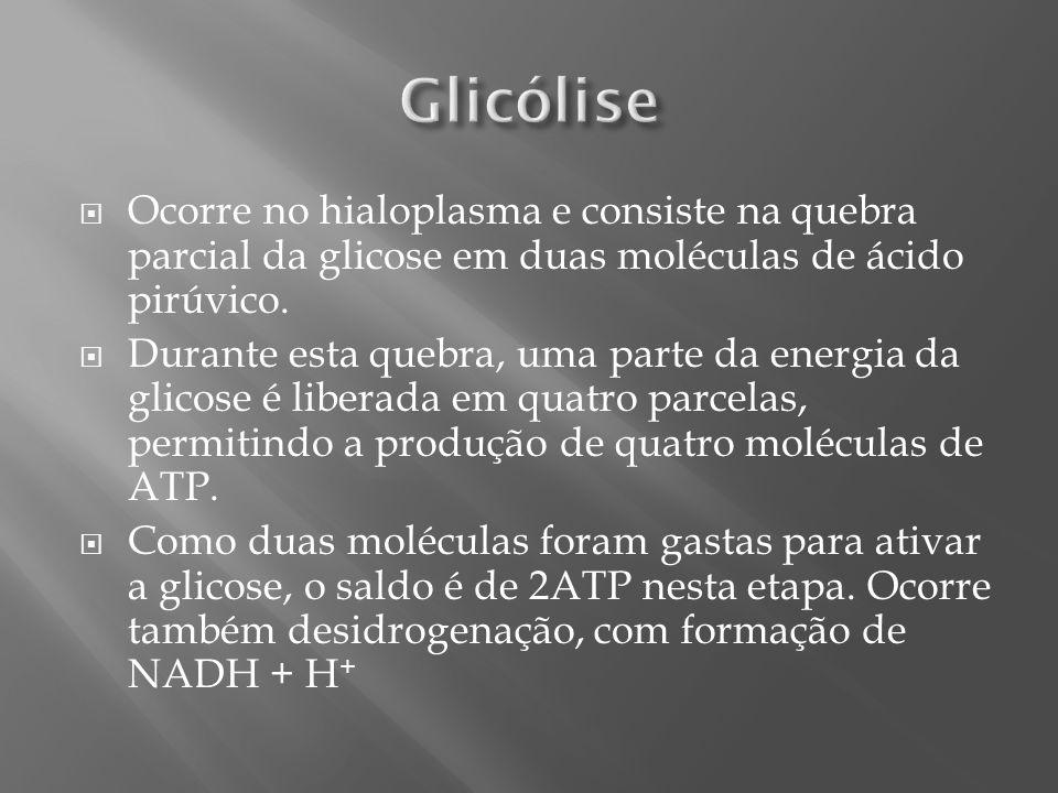 Glicólise Ocorre no hialoplasma e consiste na quebra parcial da glicose em duas moléculas de ácido pirúvico.