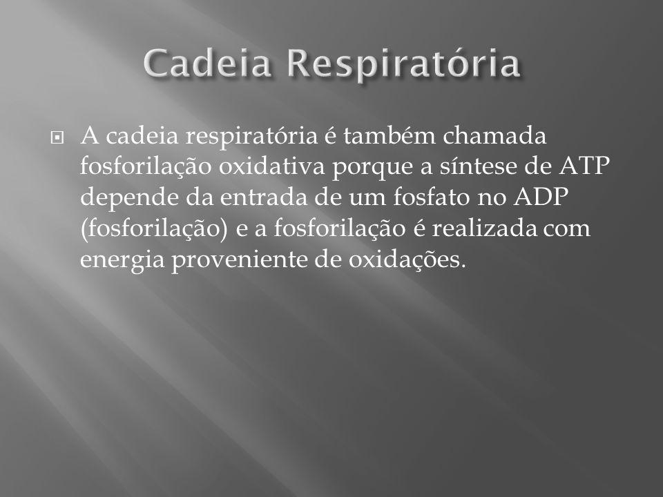 Cadeia Respiratória