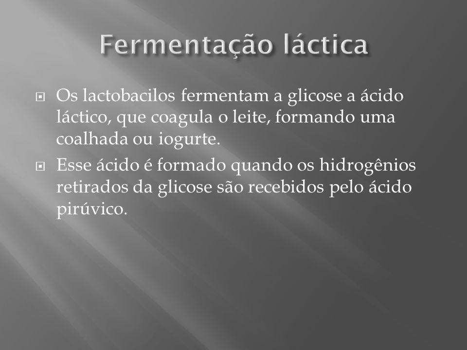 Fermentação láctica Os lactobacilos fermentam a glicose a ácido láctico, que coagula o leite, formando uma coalhada ou iogurte.