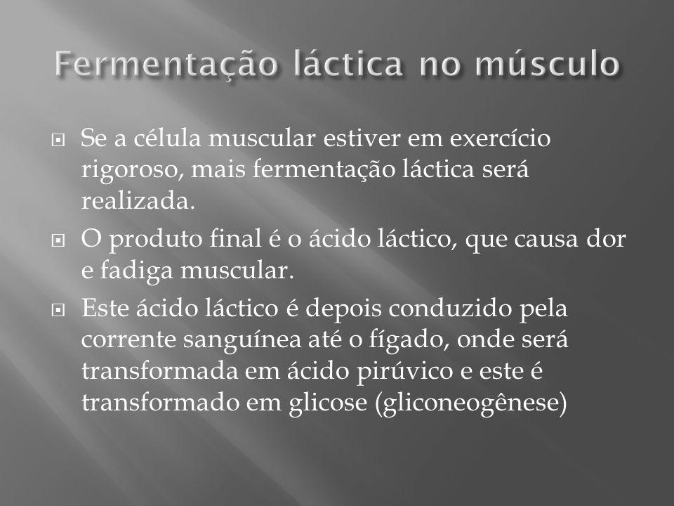 Fermentação láctica no músculo