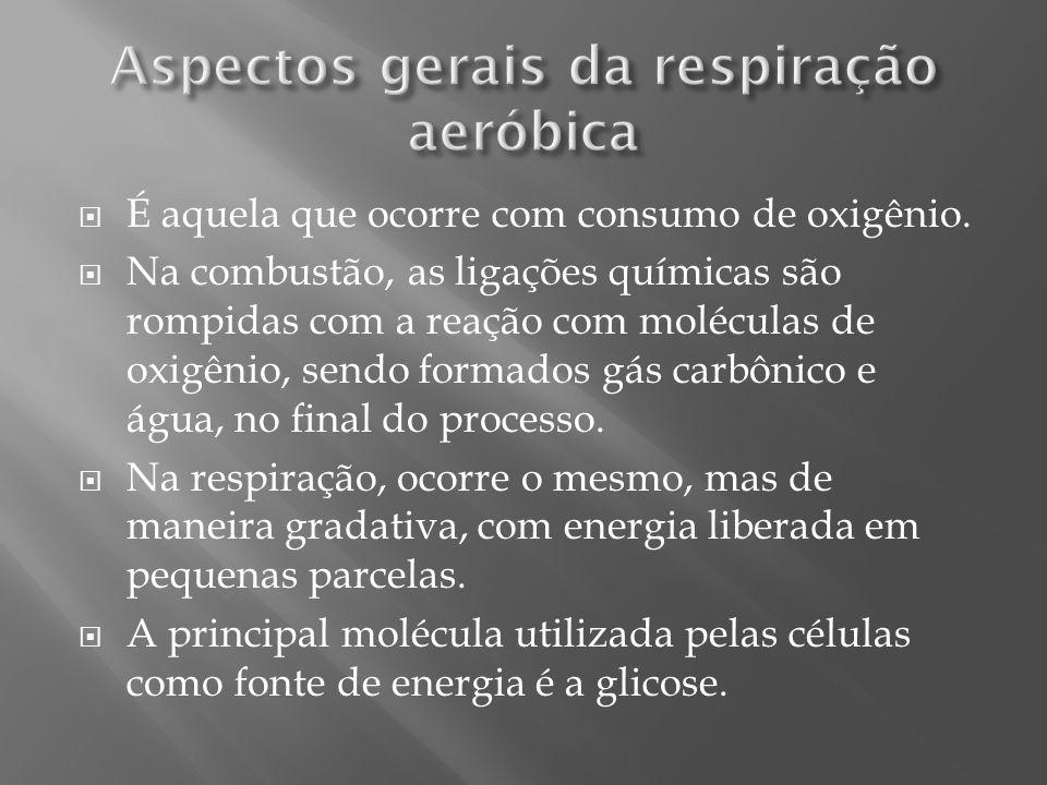 Aspectos gerais da respiração aeróbica