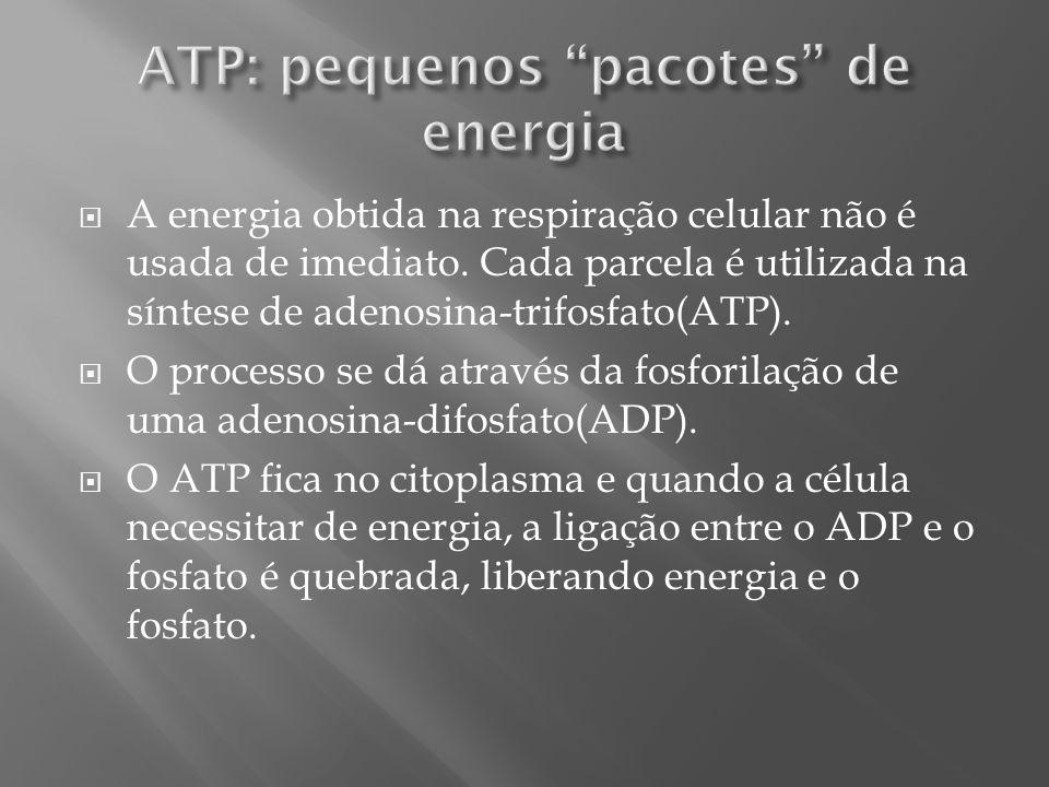 ATP: pequenos pacotes de energia