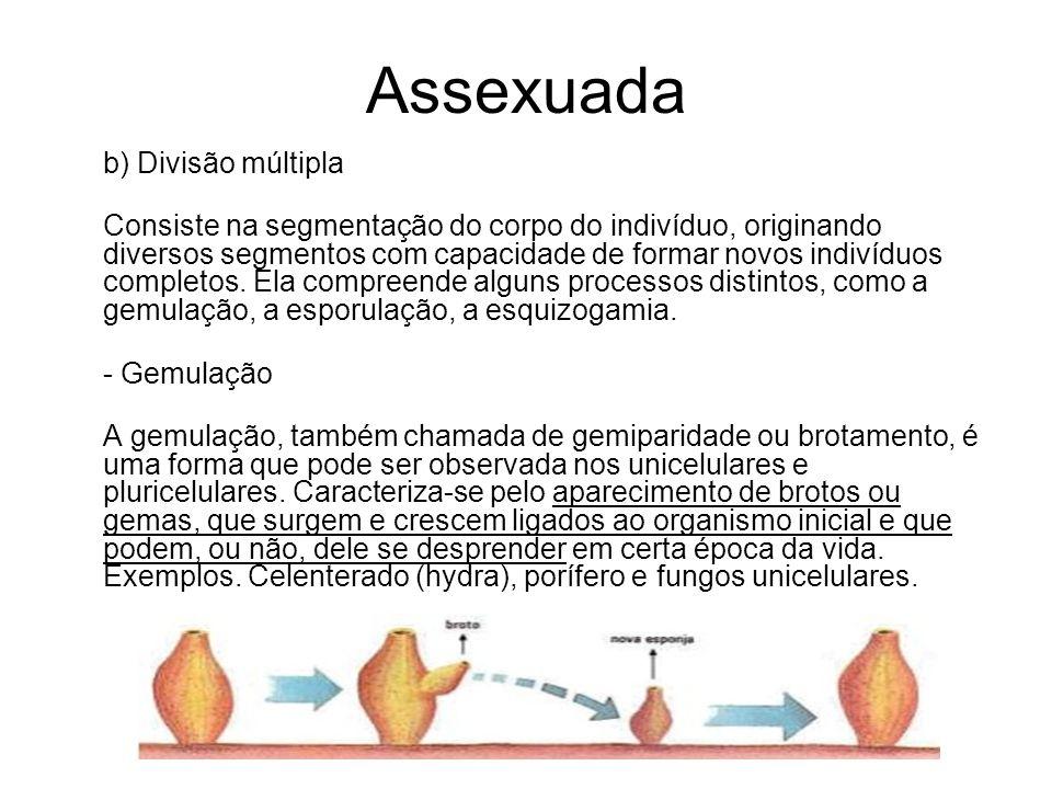 Assexuada b) Divisão múltipla