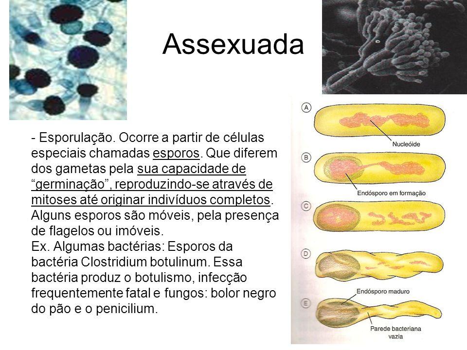 Assexuada