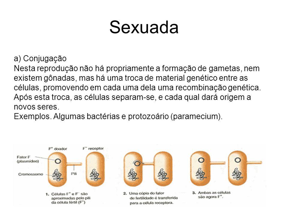Sexuada