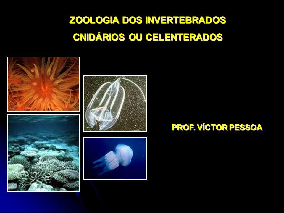 ZOOLOGIA DOS INVERTEBRADOS CNIDÁRIOS OU CELENTERADOS