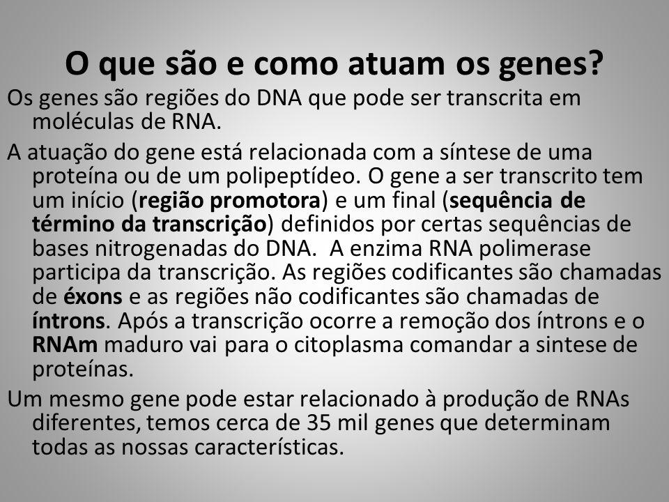 O que são e como atuam os genes