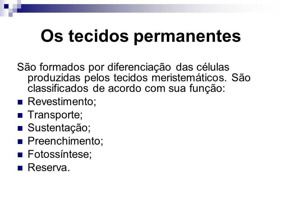 Os tecidos permanentes