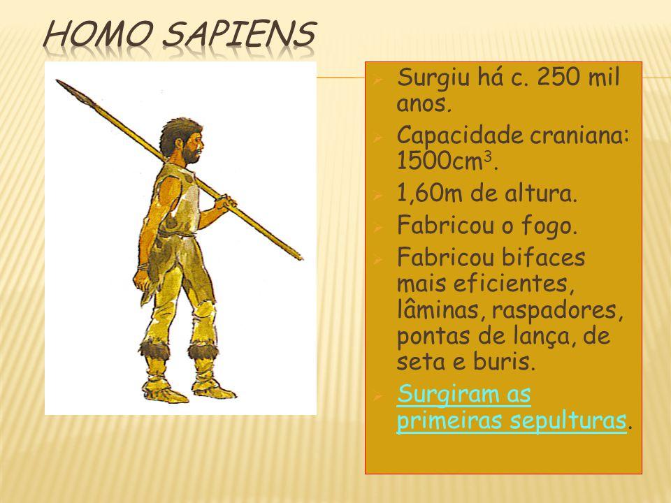 Homo sapiens Surgiu há c. 250 mil anos. Capacidade craniana: 1500cm3.