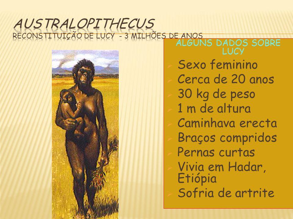 Australopithecus Reconstituição de Lucy - 3 milhões de anos