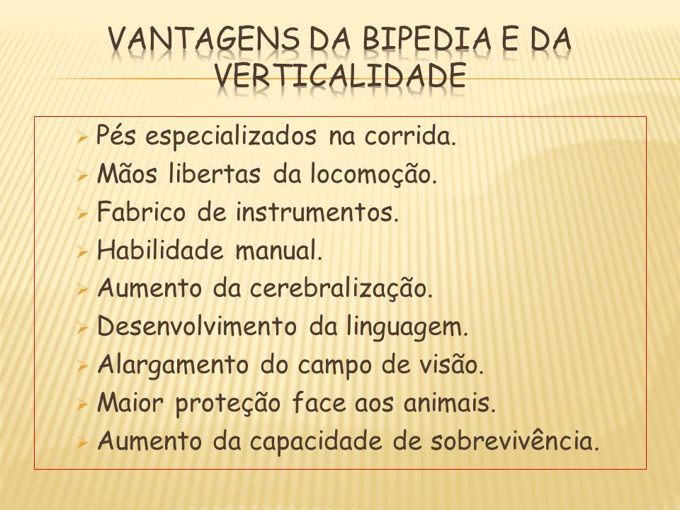 VANTAGENS DA BIPEDIA E DA VERTICALIDADE