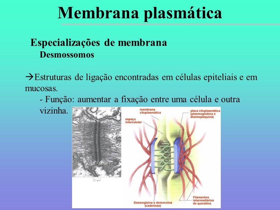 Membrana plasmática Especializações de membrana Desmossomos