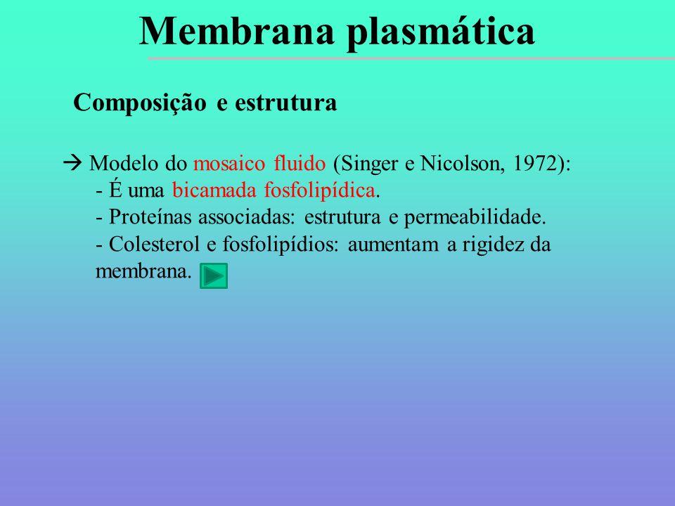 Membrana plasmática Composição e estrutura