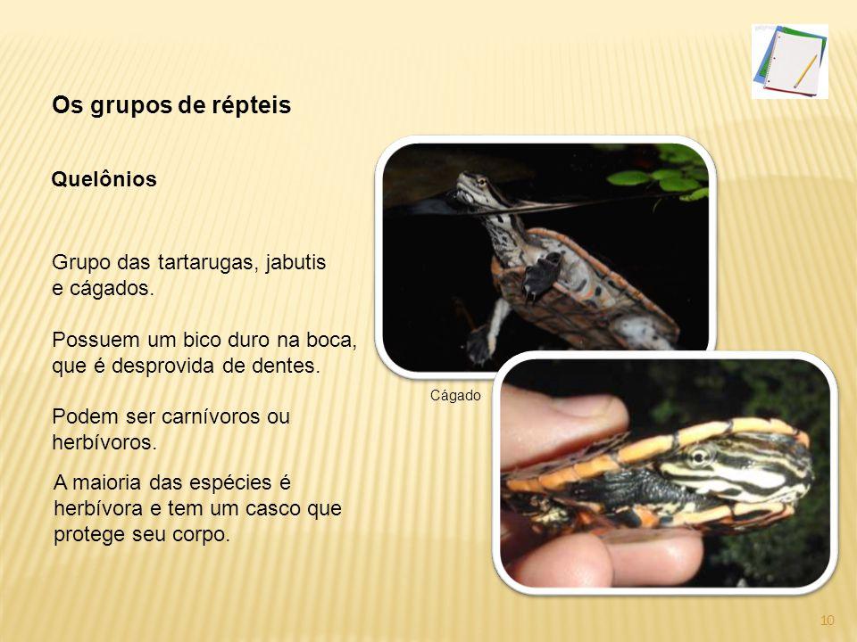 Os grupos de répteis Quelônios Grupo das tartarugas, jabutis
