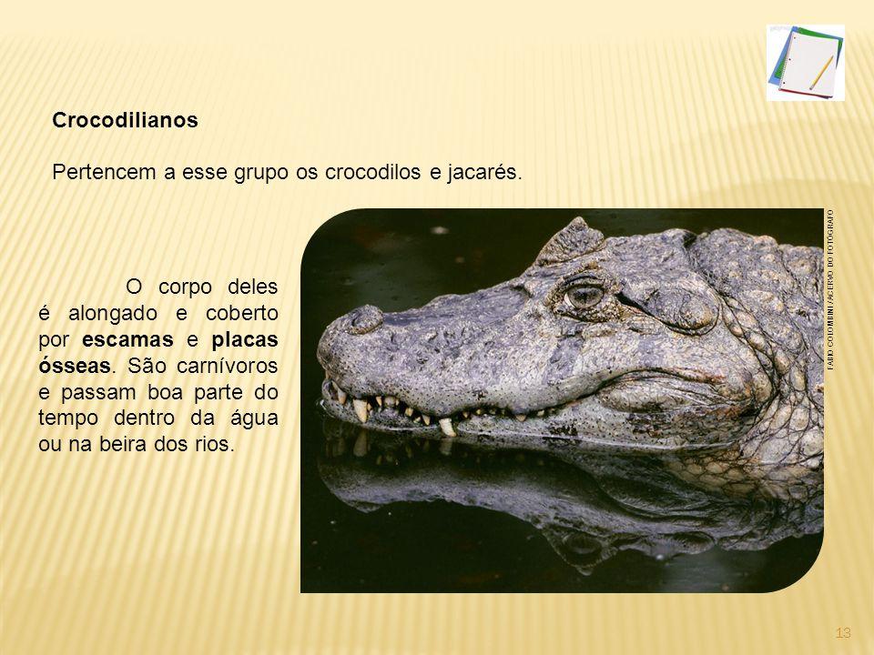 Pertencem a esse grupo os crocodilos e jacarés.