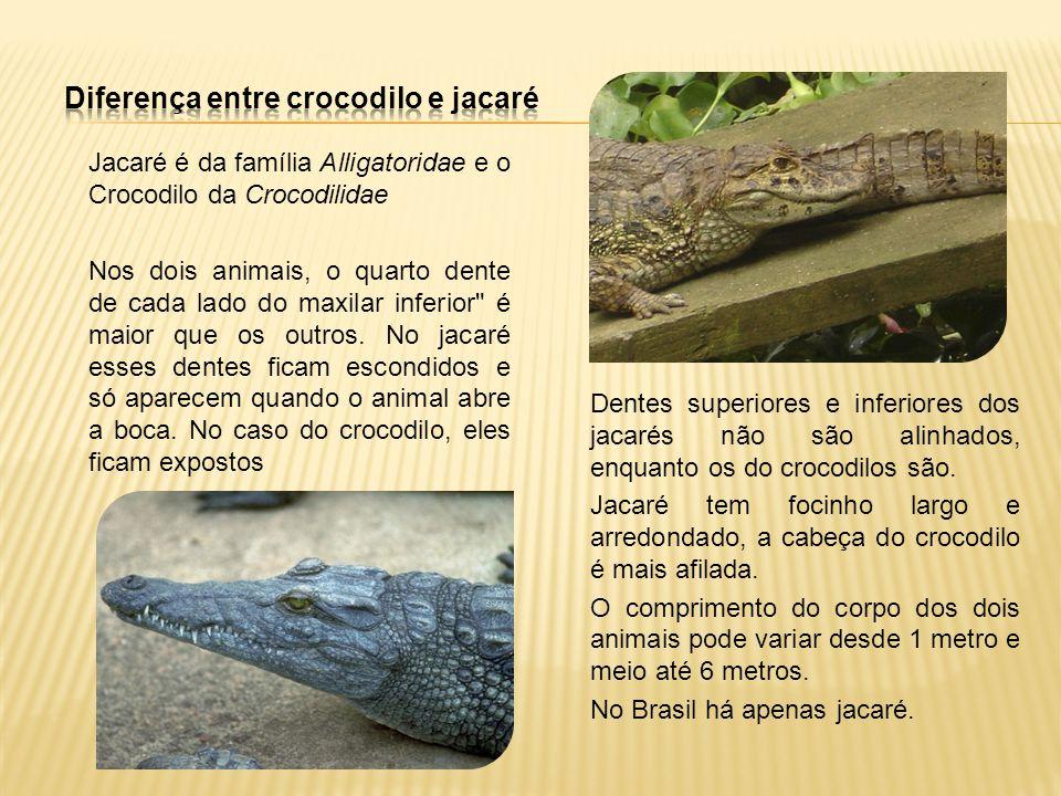 Diferença entre crocodilo e jacaré