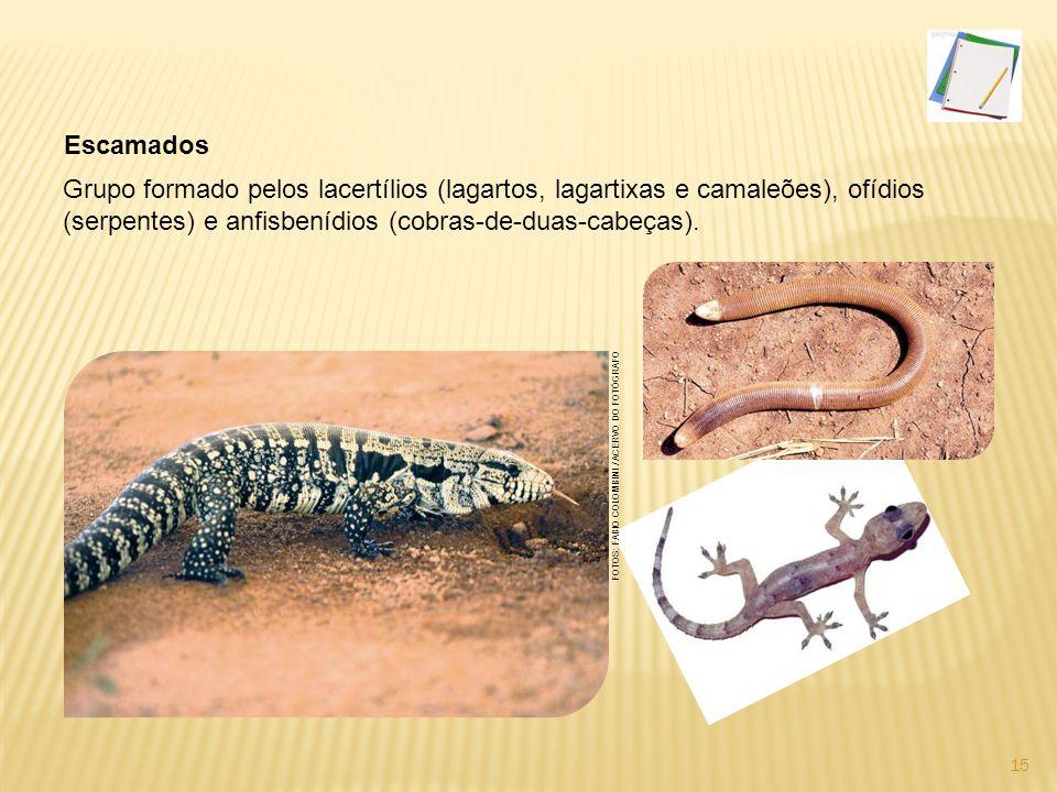 Escamados Grupo formado pelos lacertílios (lagartos, lagartixas e camaleões), ofídios (serpentes) e anfisbenídios (cobras-de-duas-cabeças).