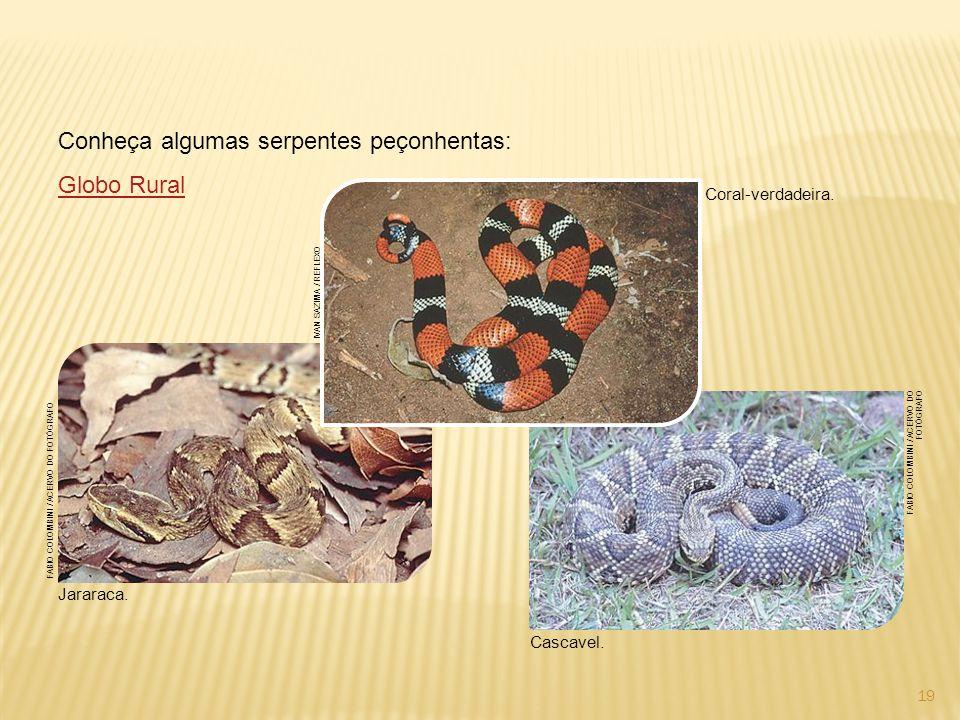 Conheça algumas serpentes peçonhentas: Globo Rural